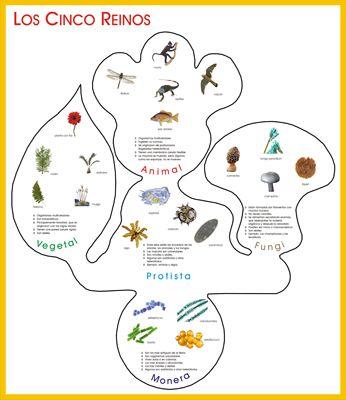 Cartelón los 5 reinos hoja-huella-hongo.jpg | Cn | Pinterest ...