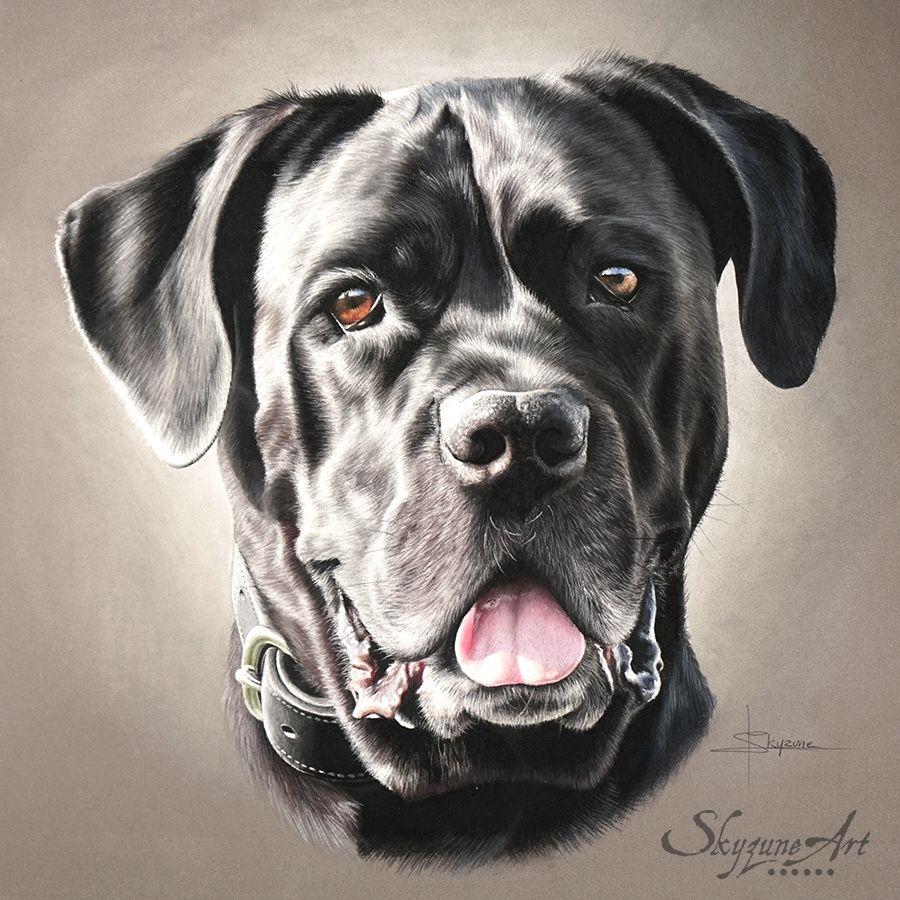 Halfa Pastels 30x30cm By Skyzune Art Artiste Animalier