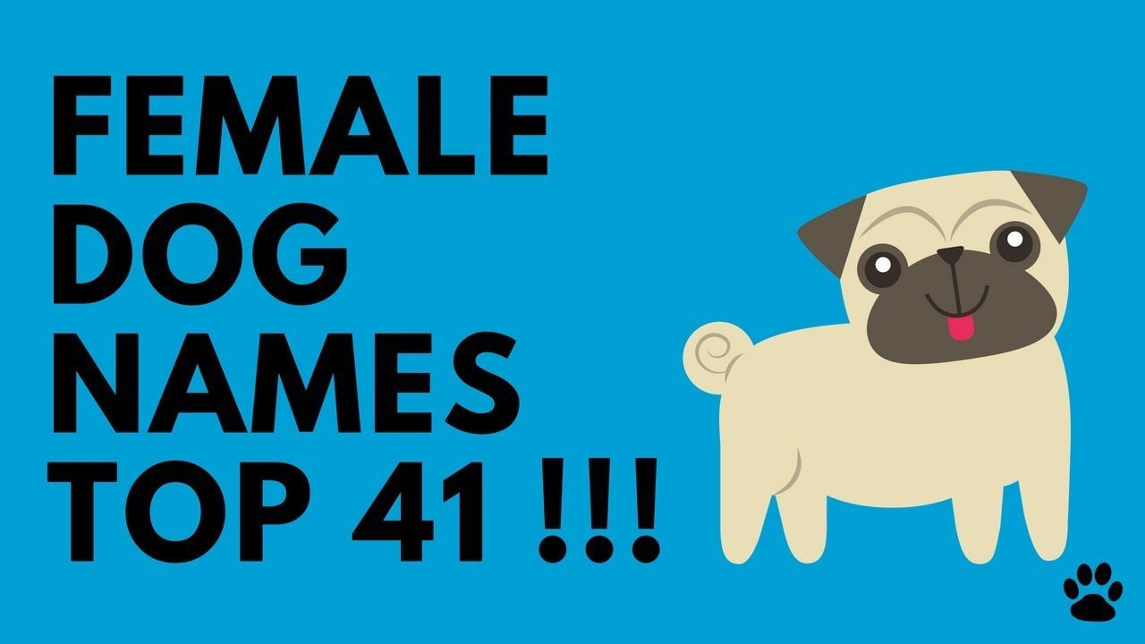 Female Dog Names 2019 Survey Results Top Names For Girl Puppies