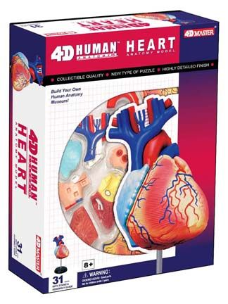 4d Anatomy Heart Model Anatomy