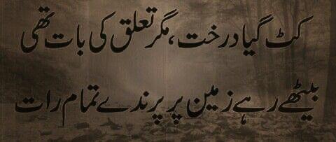 Kat gaya darakht, magar taaluq ki baat thi; Baythay rahay zameen par parinday tamaam raat | Urdu poetry, Urdu words, Poetry