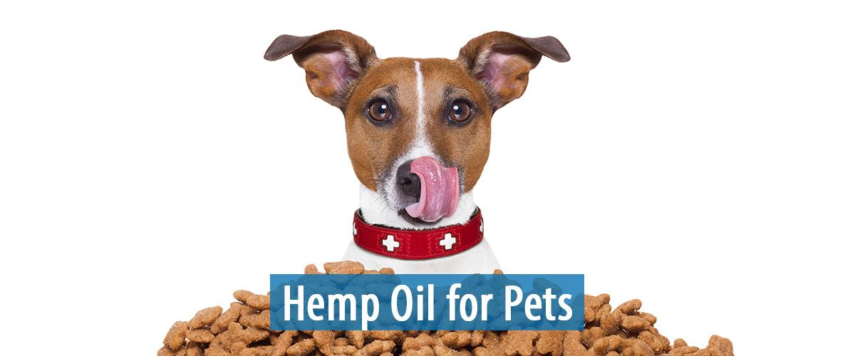 Hemp For Pets Hemp Oil For Pets Online With Images Oils For Dogs