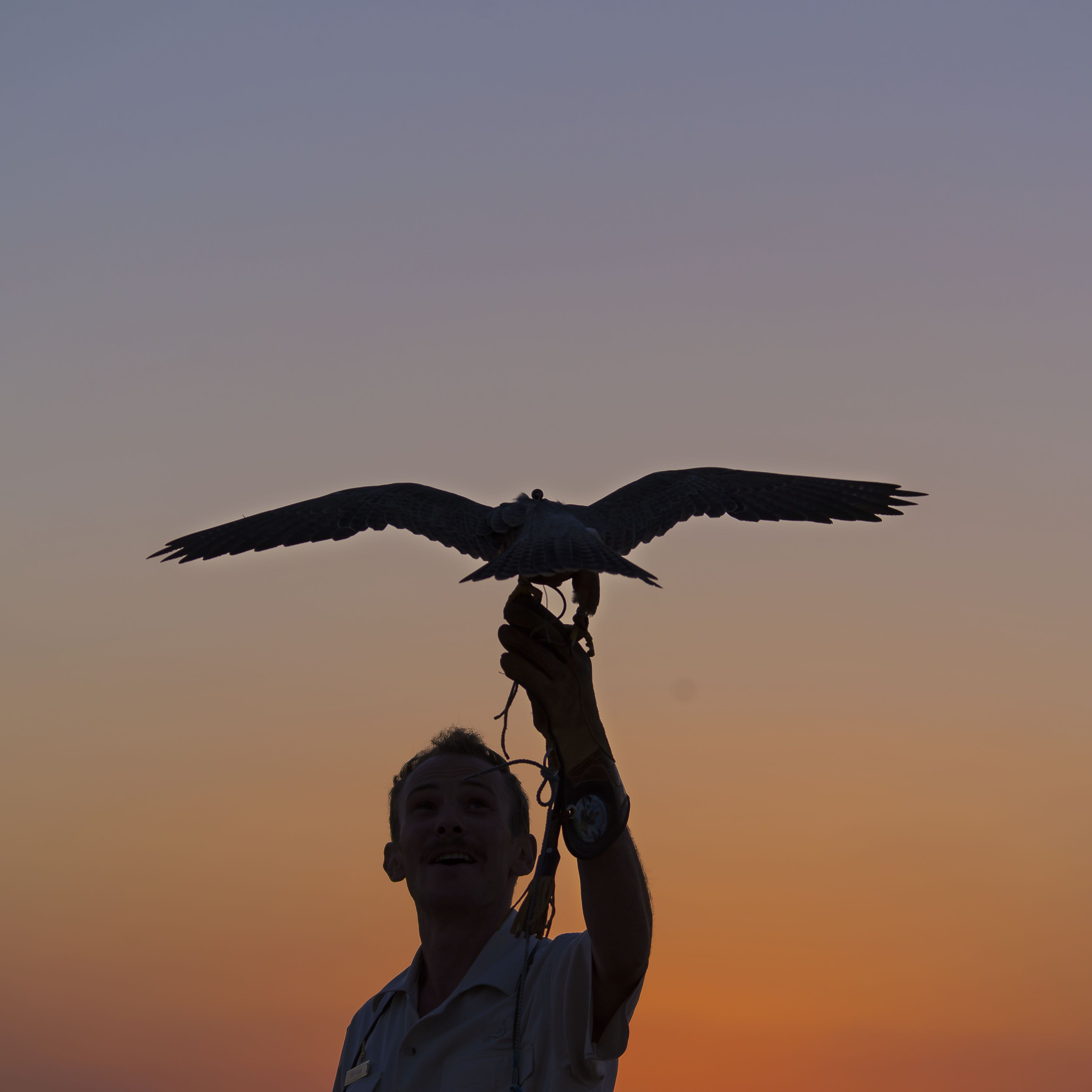 Take To Arab Tradition At Al Hurr Falconry Services In Nad Al Sheba 사진 한국