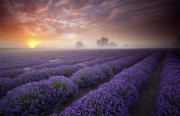 Lavender sunrise - Antony Spencer.