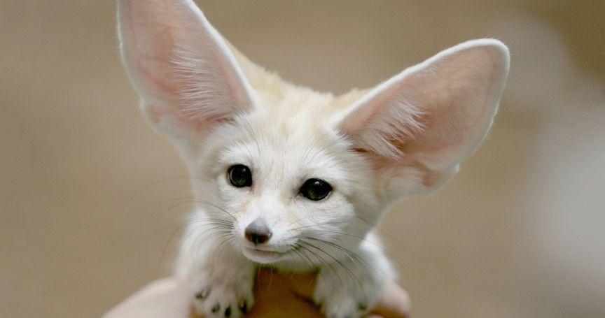 Pin On Funny Cute Animal Pics