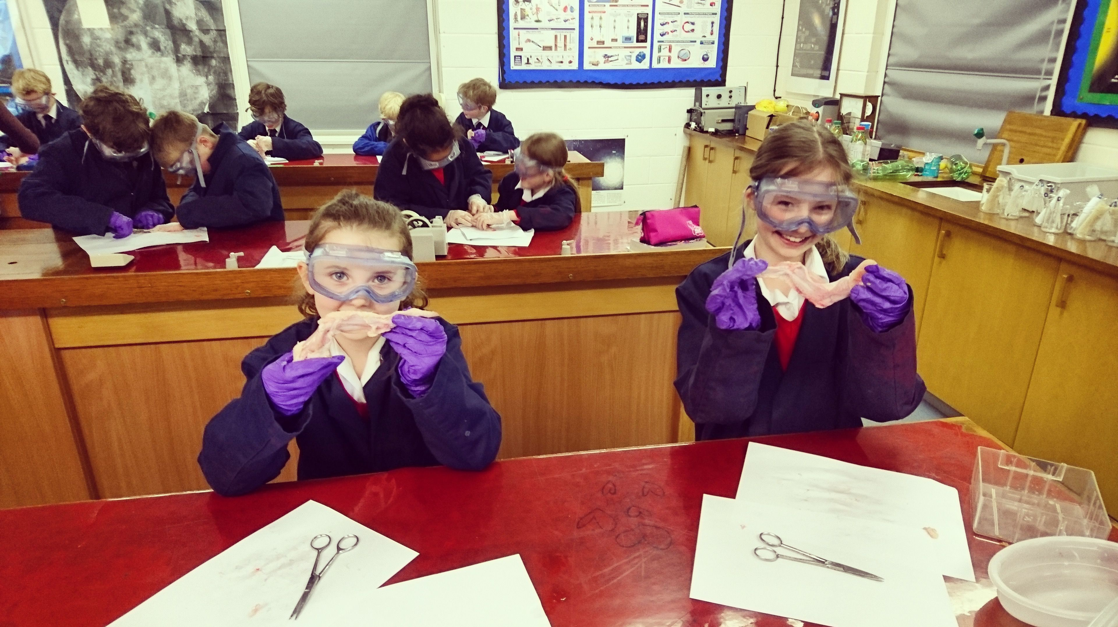 Year 4 girls catching up on a chicken wing dissection practical ...