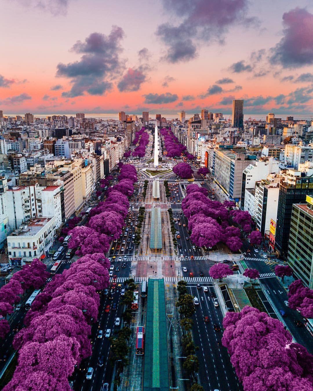 Buenos Aires. Argentina en 2020   Fotos de buenos aires, Buenos aires  turismo, Jacaranda buenos aires