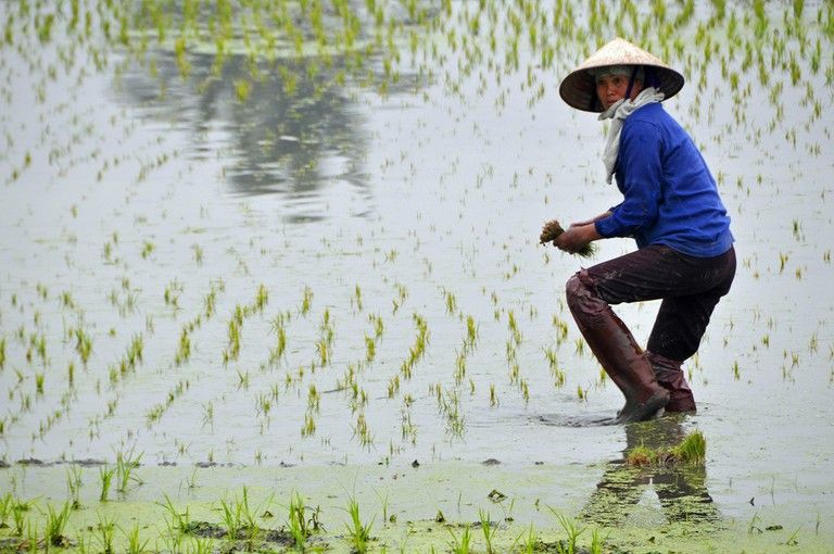 Why Do Vietnamese People Wear Conical Hats?