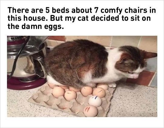 You Have Decided: Here Are The Best Cat Memes Of The Decade (100-51)