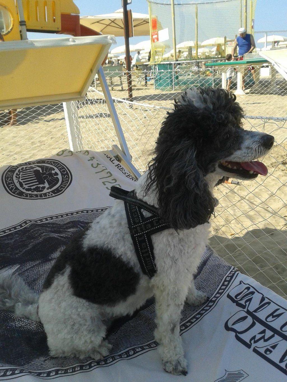 Bagno Lido 72 Igea Marina Area Beach Umbrellas For Those With