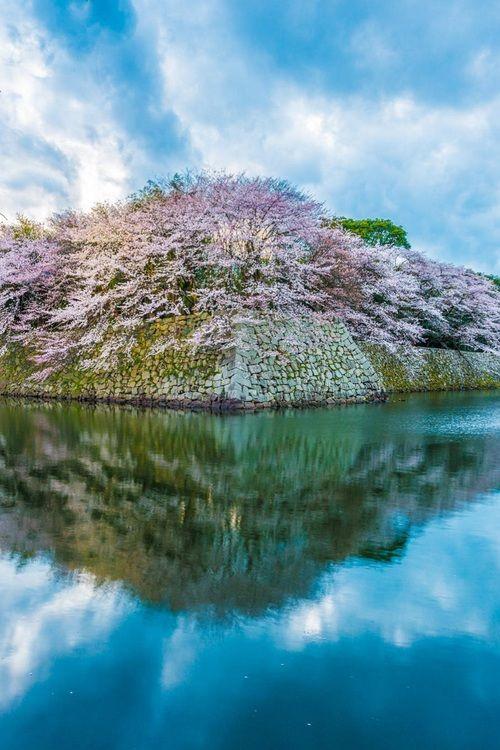 Ama in Tose, Toba bay | Japan landscape, Japanese history, Vintage japan