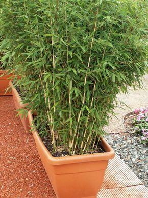 Bambushecken Als Sichtschutz Garten Pinterest Garden