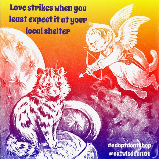 Ready for forever love? Find Cupid at your shelter #valentinesday #catart @catwisdom101