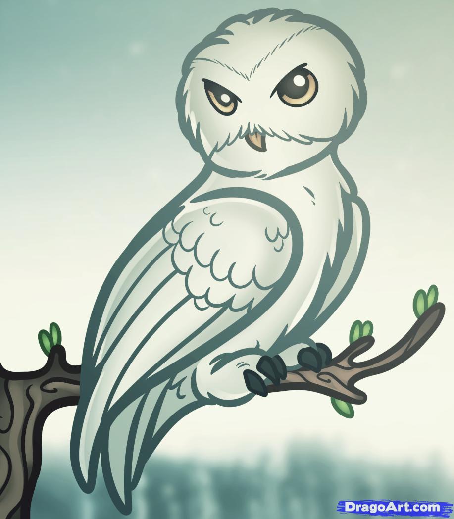 Hedwig Harry Potter Tattoo Zeichnen Eule Bilder