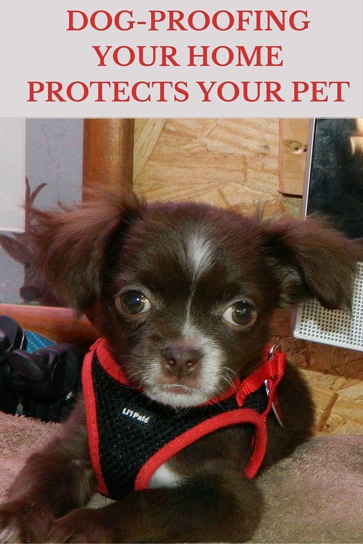 35 Doggy Love Tidbits Ideas Doggy Dogs Pets