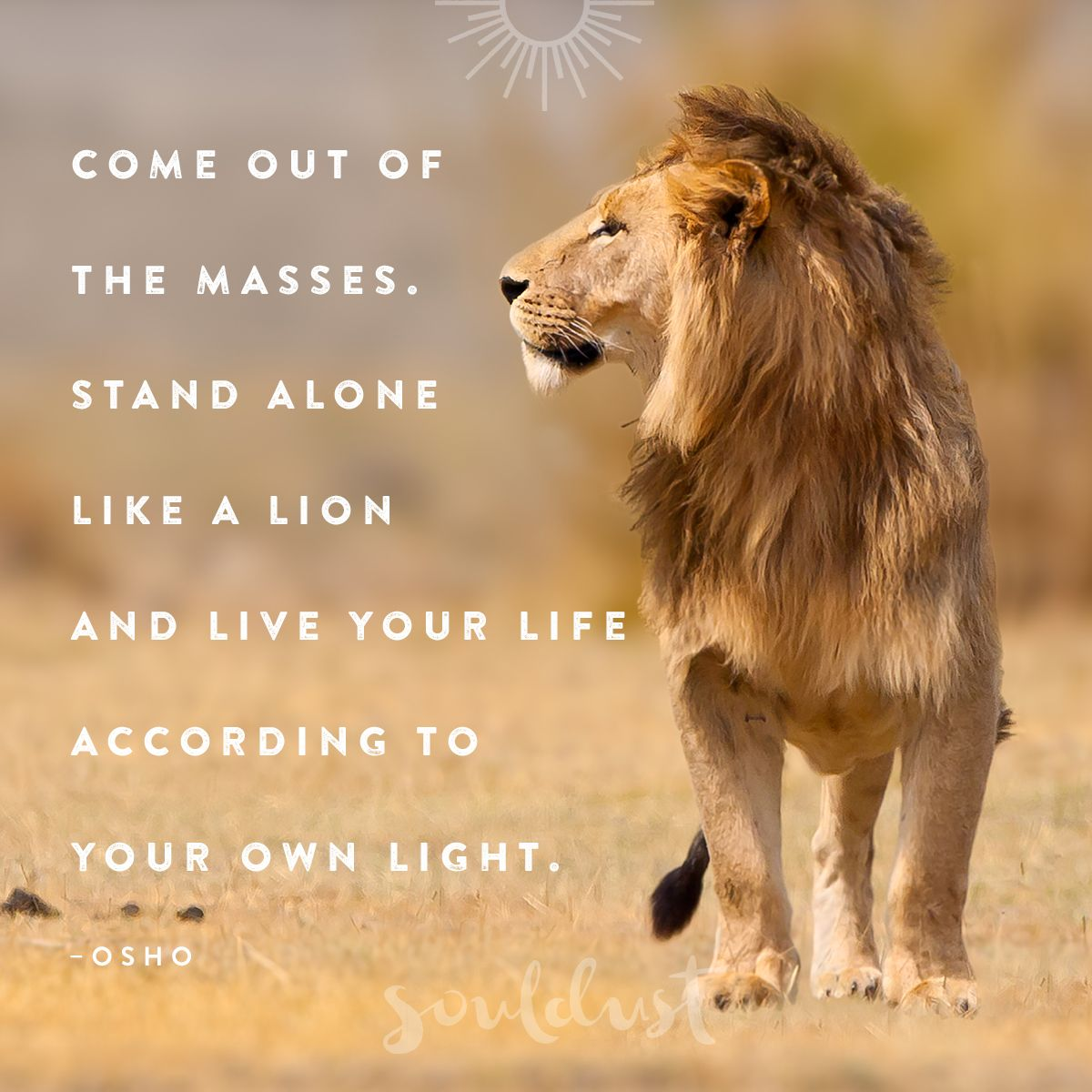 Quotes About Love Relationships: Stand Alone Like A Lion And Live Your Life According To