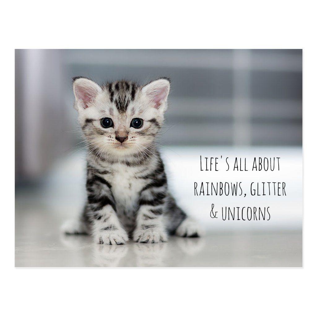 Adorable Kitten Postcard Cute Cat Breeds Best Cat Breeds American Shorthair Kitten