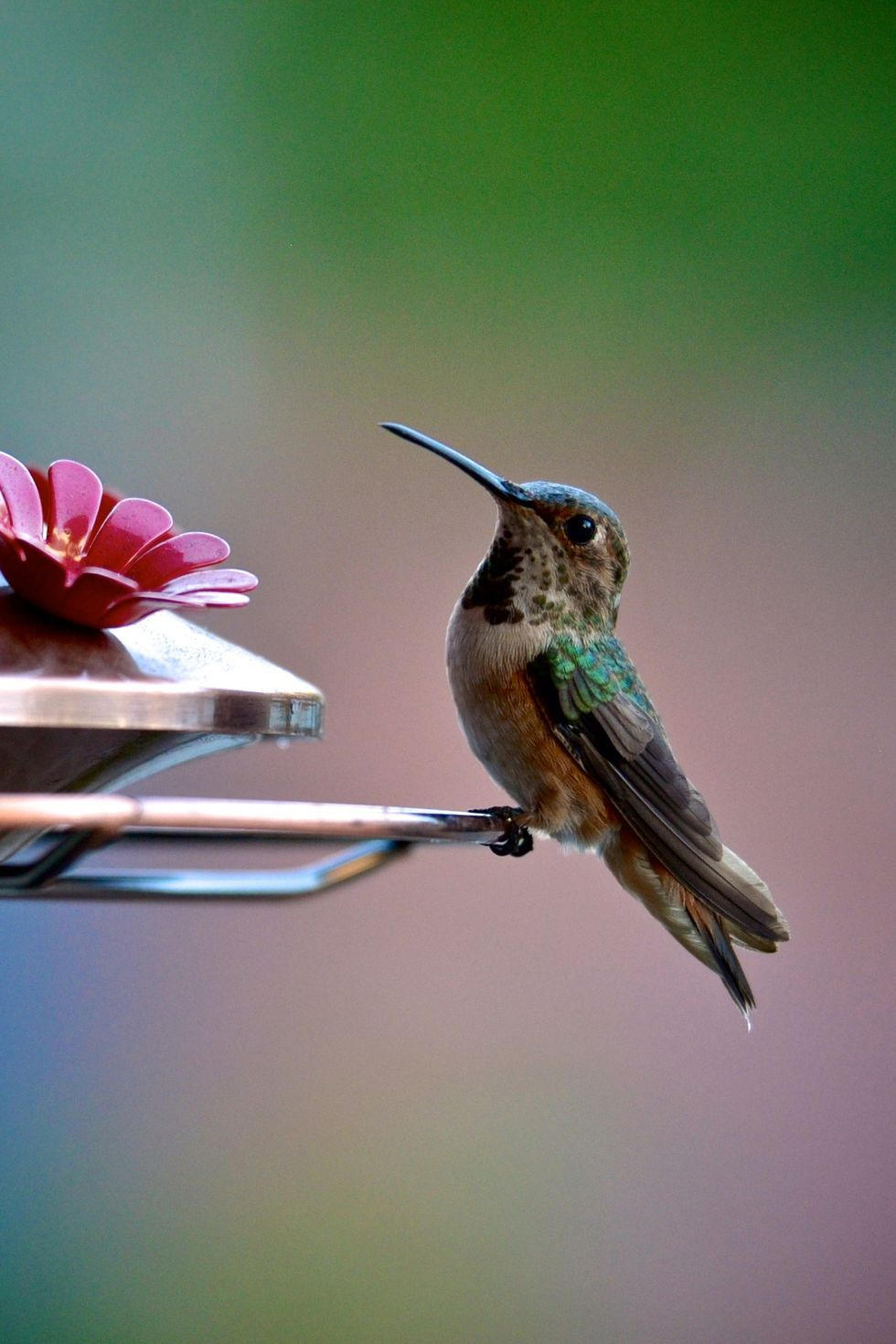 how to attract birds to feeder