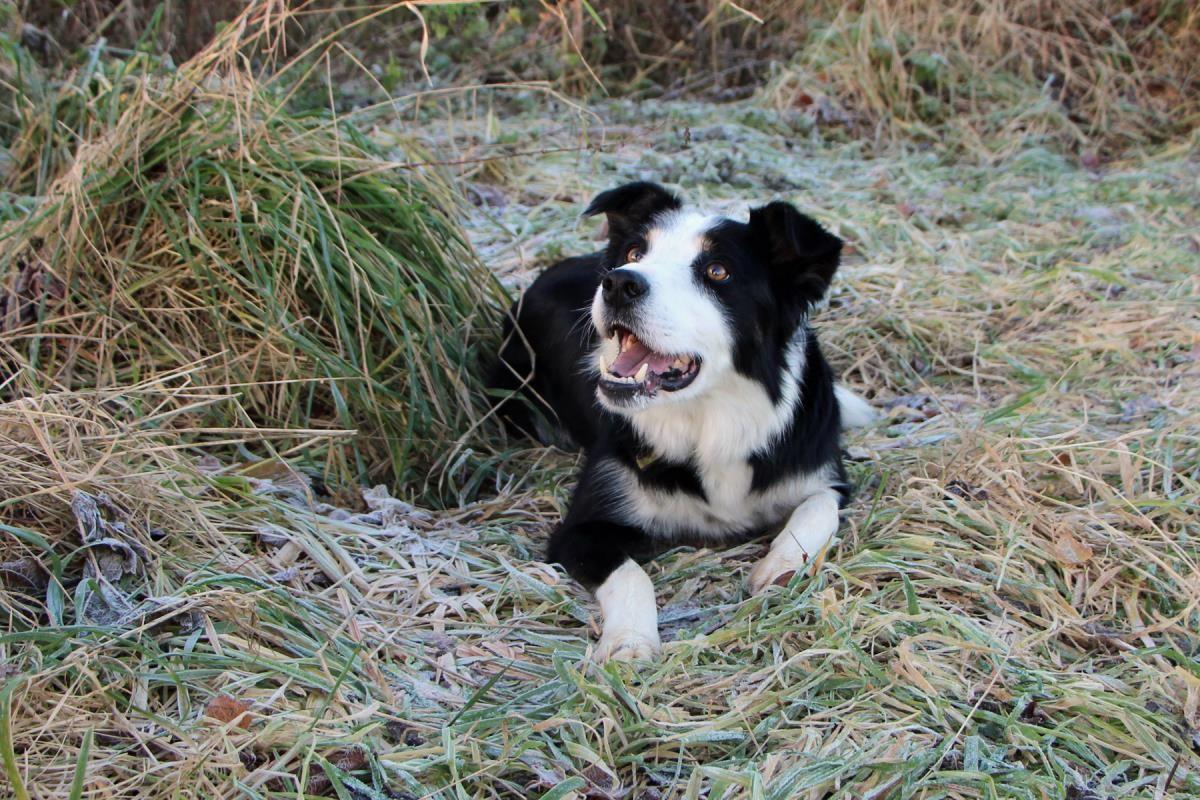 Jasper Dogs trust, Dogs, Rehoming
