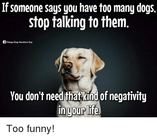 Too Many Dogs Meme Google Search Inspirational Cat Quotes Dog Memes Inspirational Cats