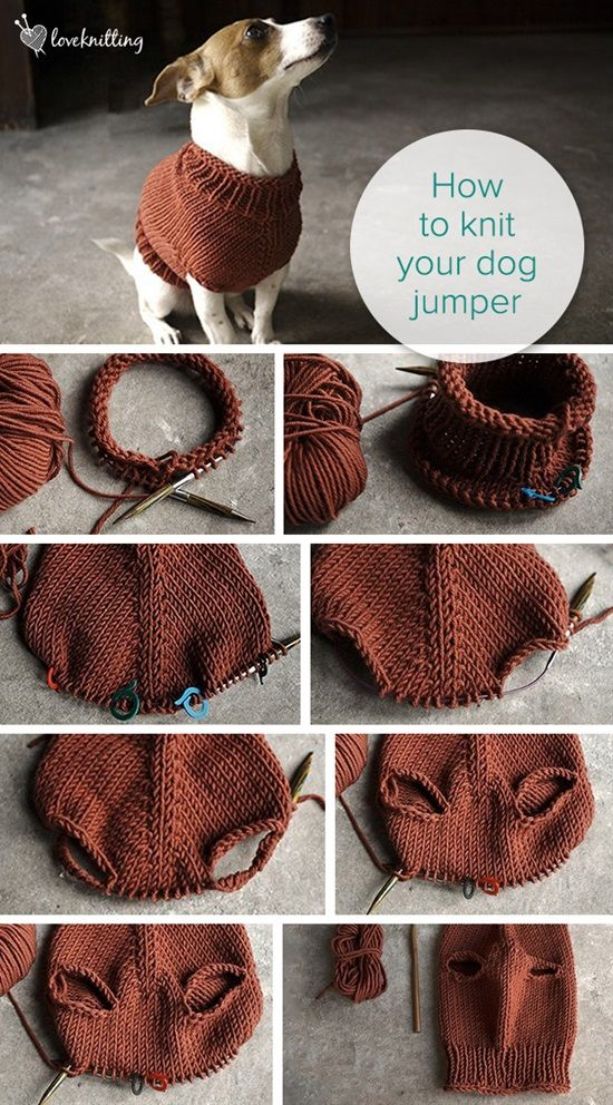 10 Easy Knitting Tutorials You Can Follow Dog Jumpers Stuffing