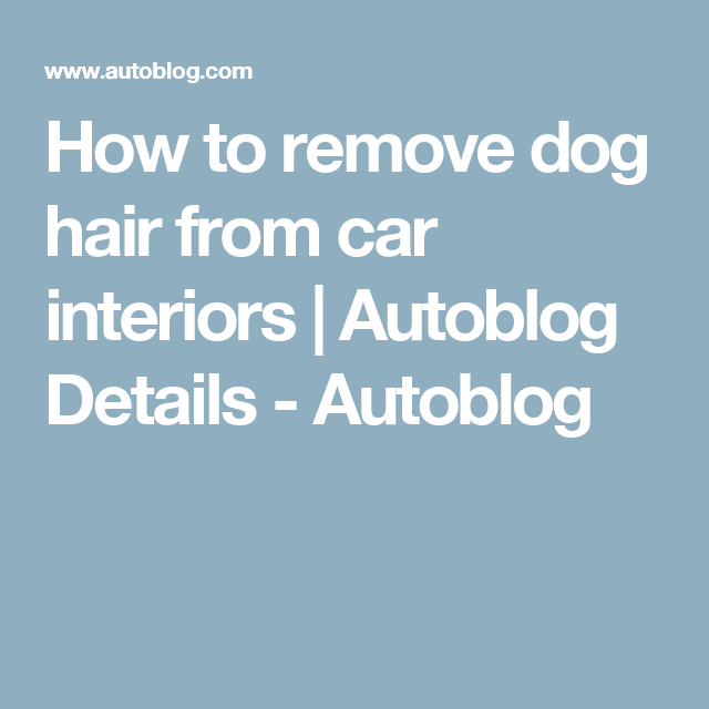 How To Remove Dog Hair From Car Interiors Pinterest Car