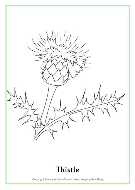Thistle Colouring Page St Andrew S Day Activities And