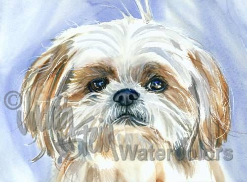 "Shih Tzu, Tri Color, AKC Toy, Pet Portrait Dog Art Watercolor Painting Print Picture, Wall Art, Home Decor, ""Garden Gnome"" Judith Stein"