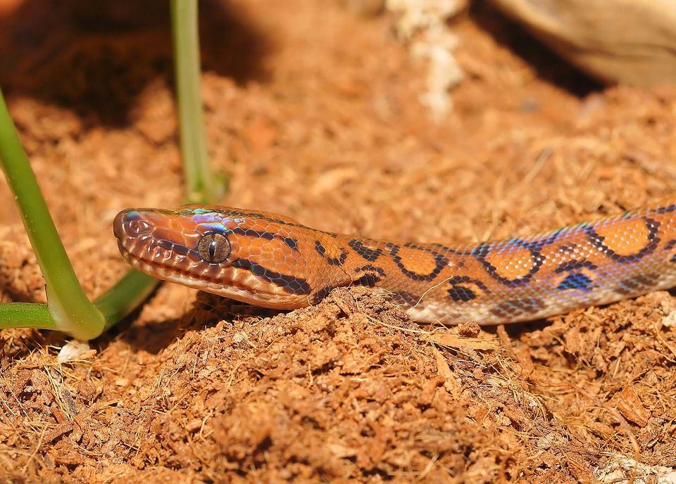 Pin Ot Polzovatelya Chumani On Tree Na Doske Snakes Zmeya