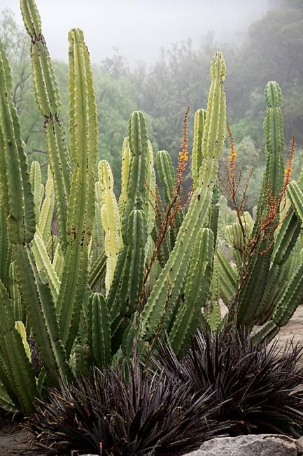 Regional Gardens Submitted By Our Readers Cactus Garden