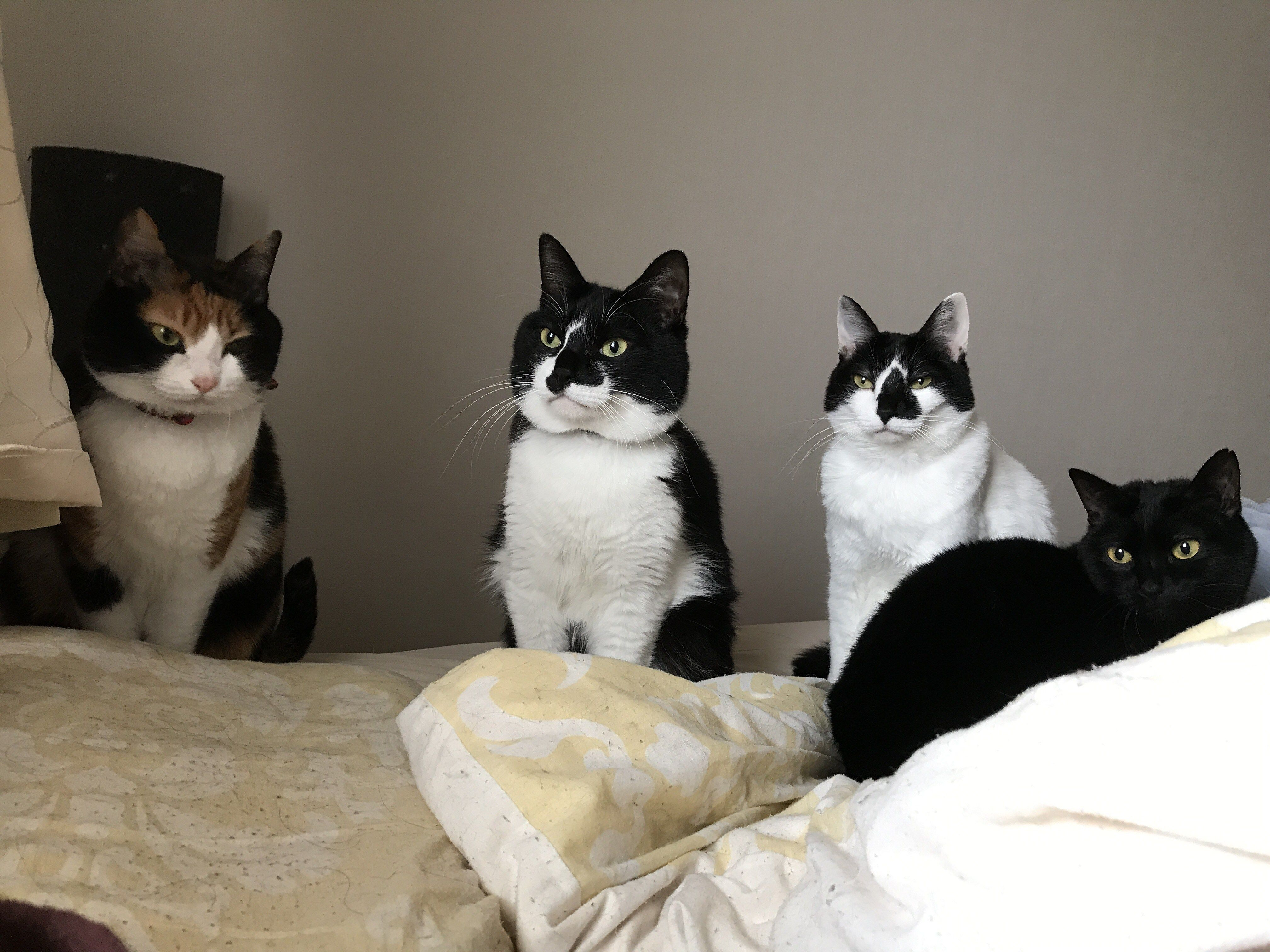 寝坊したら心なしか猫の目が冷ややか 変顔猫リュックと愉快な仲間達 猫 リュック 猫 変顔