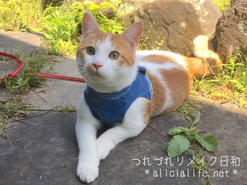 Tシャツ古着利用猫のハーネスを手作り 外に出たがる猫とのお散歩に つれづれリメイク日和 猫 ハーネス ペット用品 猫