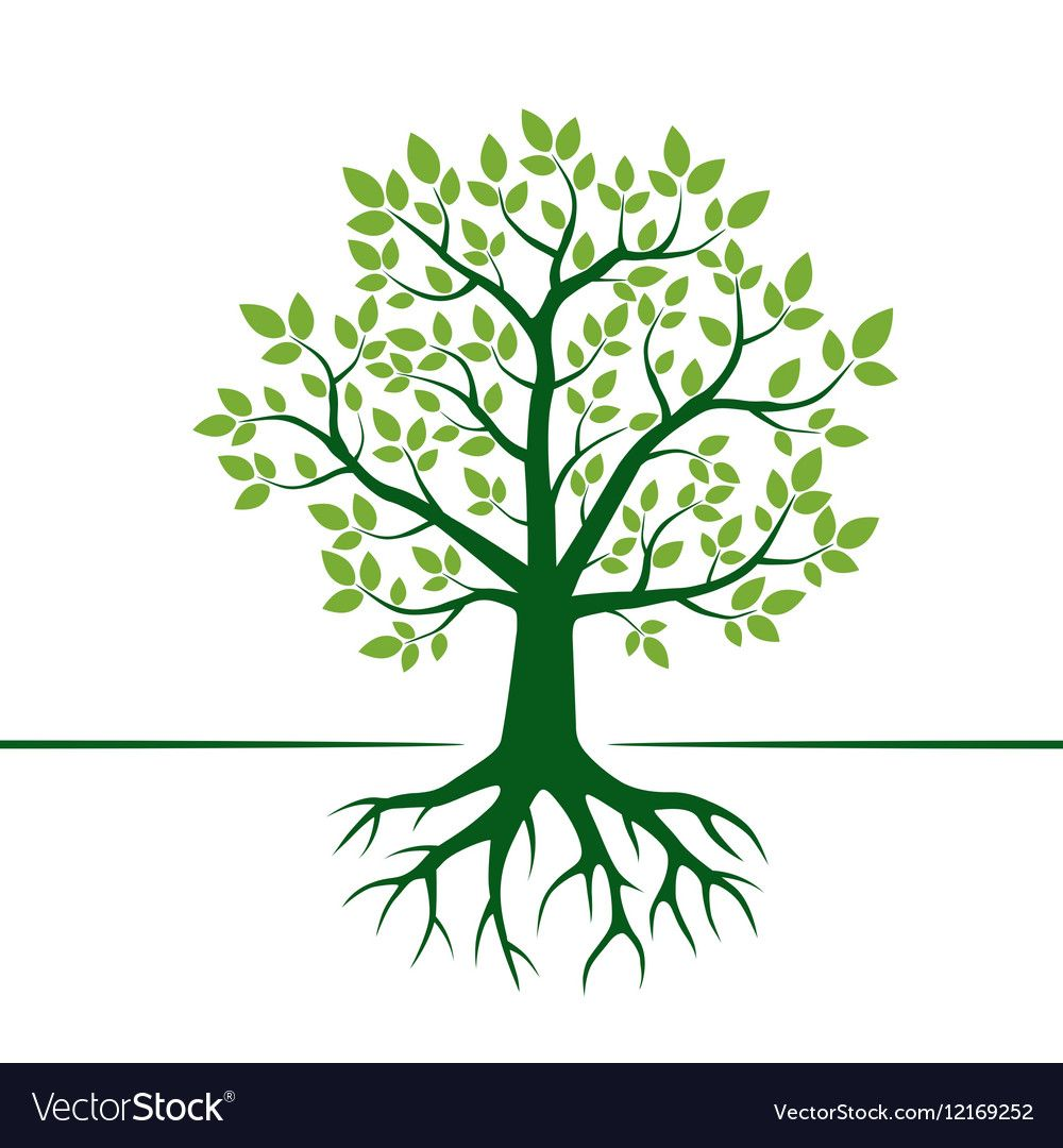 Green Tree And Roots Vector Image On Vectorstock Vector Trees Root Vector Vector Illustration