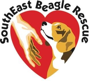 Get To Know Southeast Beagle Rescue Inc Beagle Rescue Beagle