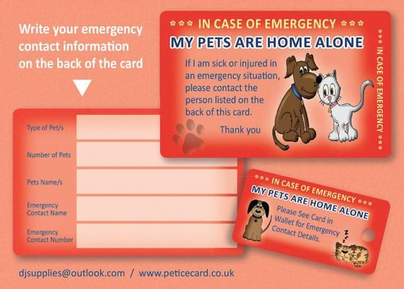 Pet Home Alone Ice Card And Key Fob Peace Of Mind When You Re Away From Home That Your Pets Will Be Taken Care Of In Case Of Emergency Pet Home