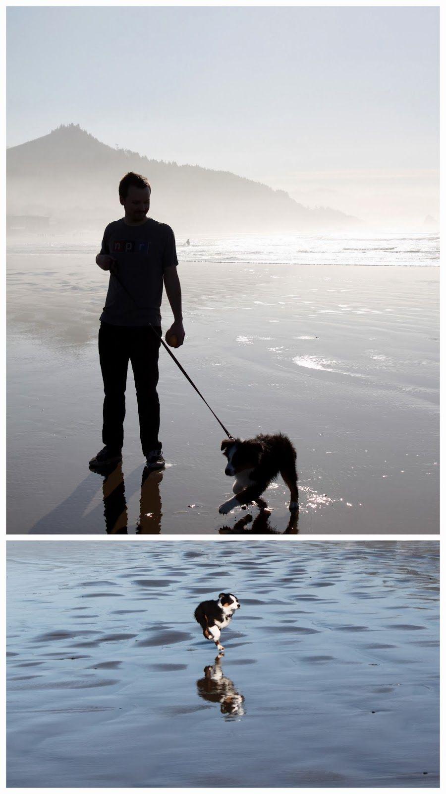 Cannon Beach, Oregon | Newlyweds in the Northwest  #CannonBeach #Oregon #Olive #Aussie #AustralianShepherd #Puppy