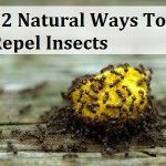 22 Natural Ways To Repel Insects