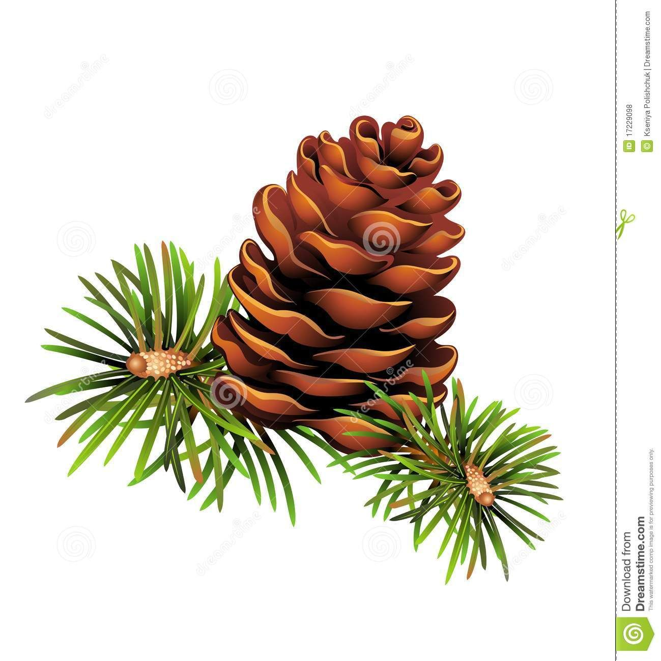 christmas pine cone drawing - photo #2