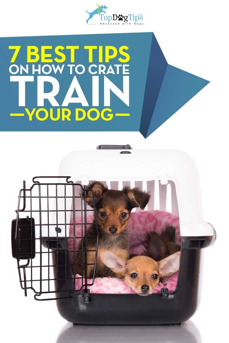 7 Tips For Crate Training Your Dog Training Your Dog Crate