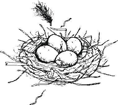 eggs in nest Colouring Pages