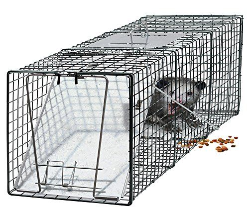 How To Get A Skunk Out Of A Cage Trap