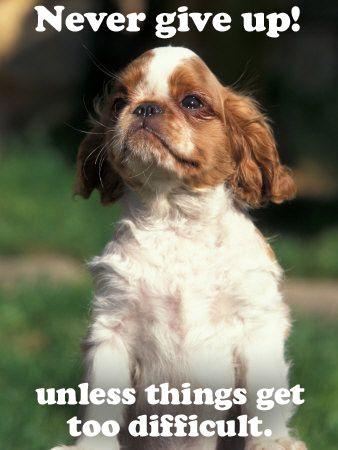 Puppy Quotes. QuotesGram   Puppy quotes, Cute puppies, Puppy ...
