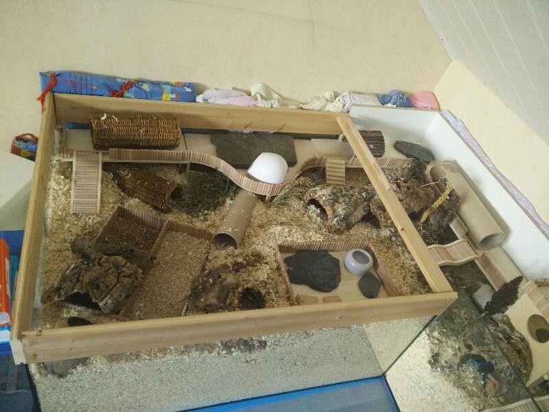 Meine zwei Gehege 1,6 und 1 qm Haltung Hamsterhilfe