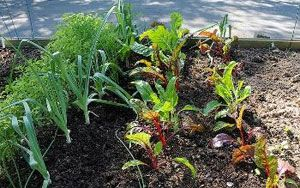 Gardeners adapting to weather changes - Yale Climate Connections