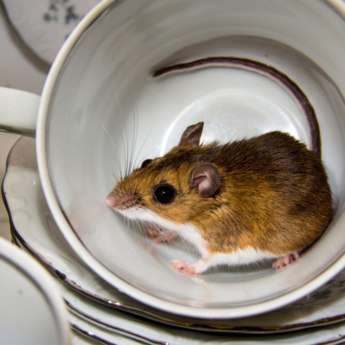 8da6e49c7f2e744112044818b51bdb15 - How To Get Rid Of Mice In Compost Bin