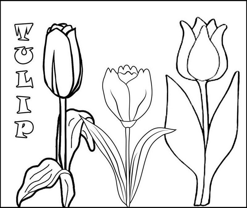 3 tulip flowers coloring pages | flower coloring pages | Pinterest