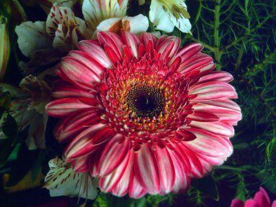 flores en en movimiento - ALOjamiento de IMágenes