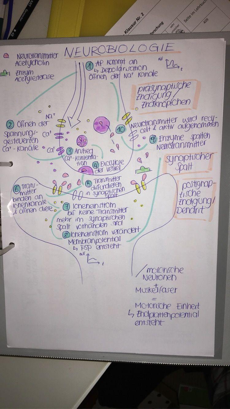 Neurobiologie Studieren