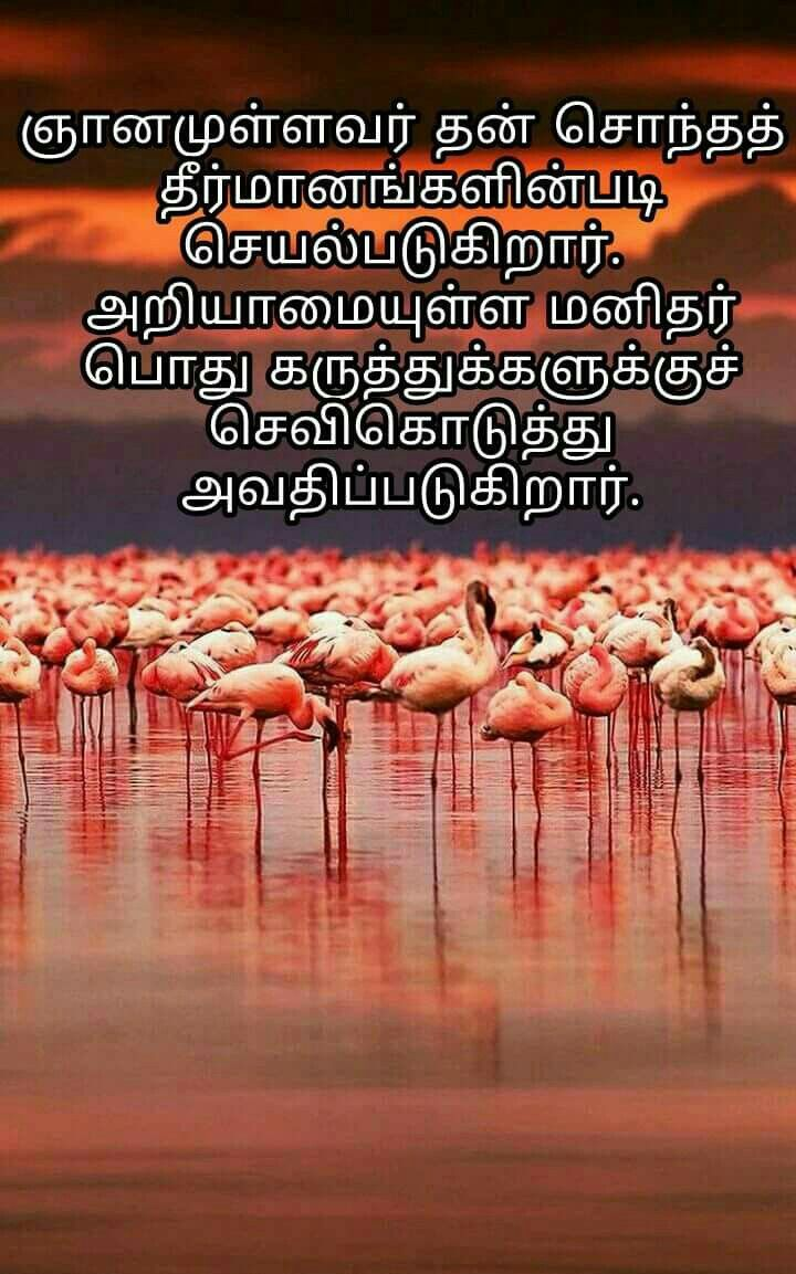 Pin by Malar Tr on Quotes in Tamil Beautiful words, Wise