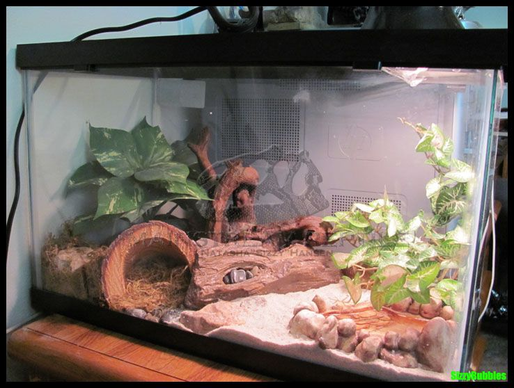 leopard gecko terrarium by on deviantart lizards and frogs. Black Bedroom Furniture Sets. Home Design Ideas